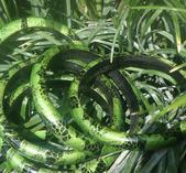Armband med grönt mönster